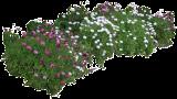 (OSEC10) Osteospermum ecklonis ´Saturn´