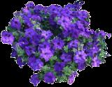(PEHY6) Petunia × hybrida ´Easy Wave Blue´